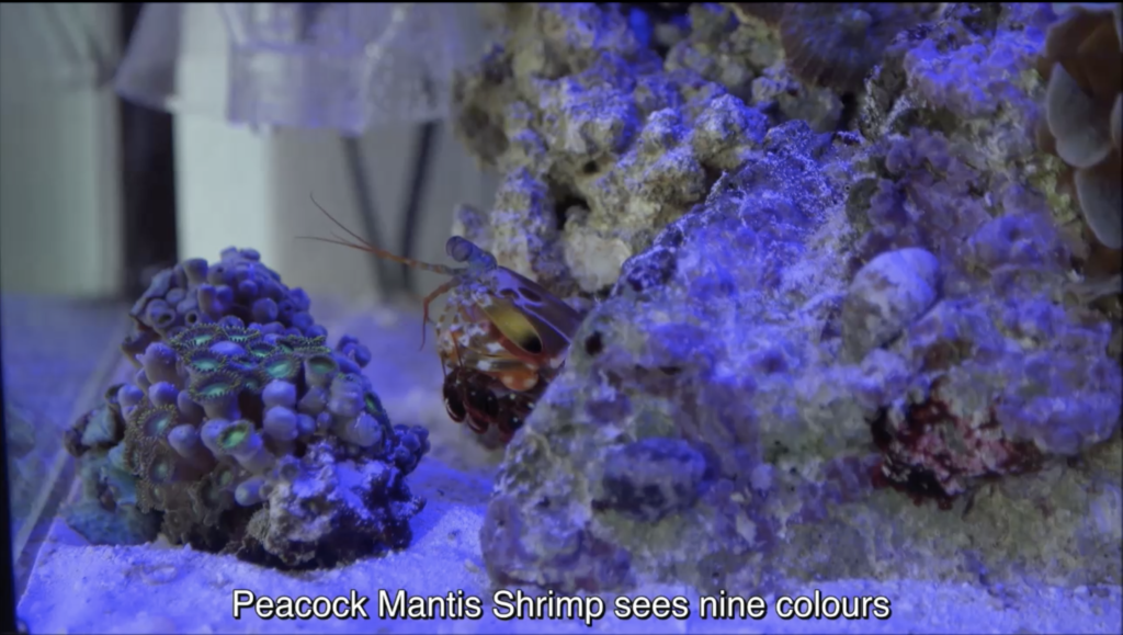Alice The Shrimp - Screenshot of Limits of Knowing - Video trailer ©Berlin Art Link